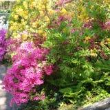 Flores e paisagens Foto de Stock Royalty Free