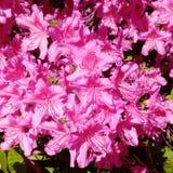 Flores e paisagens Imagem de Stock Royalty Free