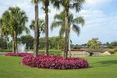 Flores e palmas fotos de stock royalty free