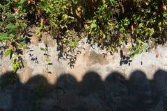 Flores e parede drystone imagem de stock