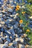 Flores e pedras Imagens de Stock