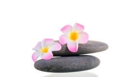 Flores e pedras lisas em um fundo branco Imagem de Stock Royalty Free