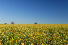 Flores e plantação Imagens de Stock