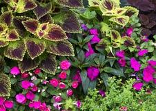 Flores e plantas Imagem de Stock Royalty Free