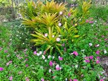 Flores e plantas Fotos de Stock