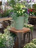 Flores e plantas coloridas em uma estufa Foto de Stock