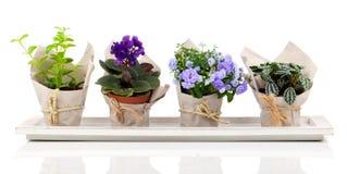 Flores e plantas da mola no empacotamento de papel Foto de Stock