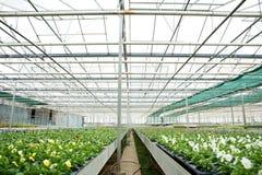 Flores e plantas em uma estufa Imagem de Stock