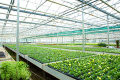 Flores e plantas em uma estufa Fotos de Stock
