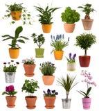 Flores e plantas em uns potenciômetros Imagem de Stock Royalty Free
