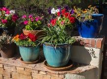 Flores e plantas em uns recipientes coloridos Imagens de Stock