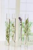 Flores e plantas em uns tubos de ensaio fotos de stock