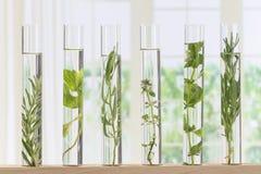Flores e plantas em uns tubos de ensaio fotografia de stock