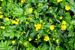 Flores e plantas verdes Foto de Stock