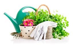 Flores e plantas verdes para jardinar com ferramentas de jardim fotos de stock