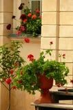 Flores e potenciômetros Fotos de Stock Royalty Free