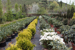 Flores e rebentos Imagens de Stock Royalty Free