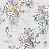 Flores e sementes de Lotus ilustração do vetor