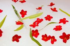 Flores e Sul. Fotos de Stock