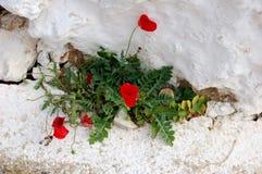 Flores e tempo Fotos de Stock Royalty Free
