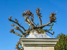Flores e tiros das uvas que crescem sobre a coluna no Loire imagens de stock royalty free