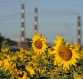 Flores e tubulações fotografia de stock