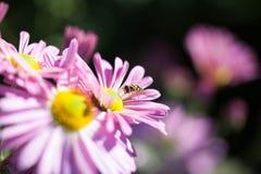 Flores e uma mosca do pairo Imagens de Stock