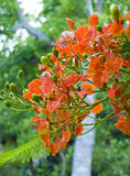 Flores e vagens Imagens de Stock