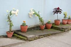 Flores e vasos de flores da argila na rua Imagens de Stock Royalty Free