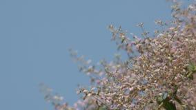 Flores e vento da orquídea do chuveiro video estoque
