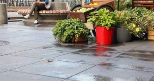 Flores e verdes em umas cubetas no asfalto molhado nos pés dos transeuntes filme