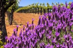 Flores e vinhedos fotografia de stock