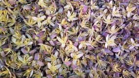 Flores egípcias da palma espalhadas no assoalho fotografia de stock