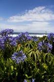 Flores em África do Sul fotos de stock