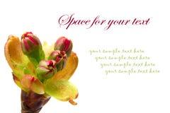 Flores em botão Fotos de Stock Royalty Free
