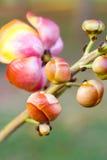 Flores em botão Imagem de Stock Royalty Free