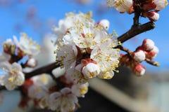 flores em botão da flor Imagens de Stock Royalty Free