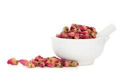 Flores em botão de Rosa Imagem de Stock Royalty Free