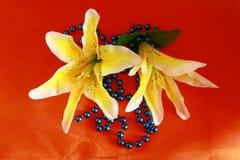 Flores em botão do lírio Foto de Stock Royalty Free