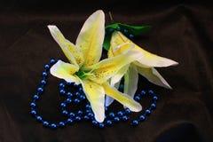 Flores em botão do lírio Imagens de Stock Royalty Free