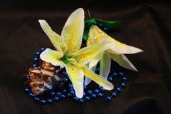 Flores em botão do lírio Fotografia de Stock