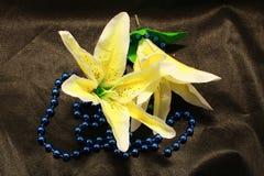 Flores em botão do lírio Imagens de Stock