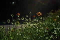Flores em botão piscar Imagens de Stock Royalty Free