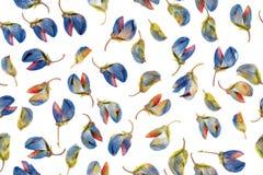 Flores em botão secas do lupine no branco Teste padrão sem emenda Foto aérea dos botões secados do lupinus Herbário, backgroun do ilustração stock