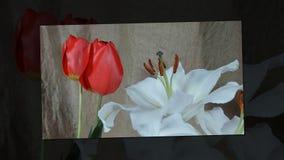 Flores em bot?o coloridas de floresc?ncia, metragem do timelapse Feche acima, macro video estoque