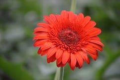 Flores em Cameron Highlands Malaysia fotos de stock royalty free
