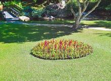 flores em canteiros de flores do jardim do fim do verão Foto de Stock