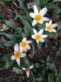 Flores em Central Park Fotos de Stock