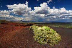 Flores em crateras da lua Fotografia de Stock