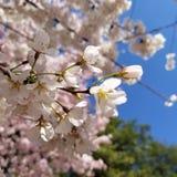 Flores em D Memorial de C imagens de stock royalty free